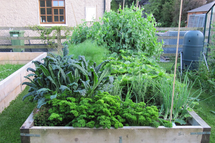 herb garden at keoghs farm
